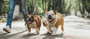 Cómo pasear a tu perro