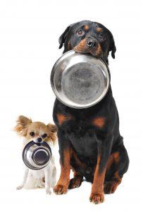 Todos los perros que vemos en la calle, ¿están abandonados?